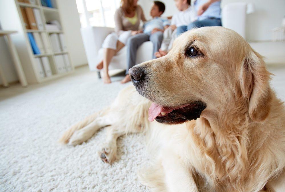 Conheça as principais recomendações para pets em condomínios