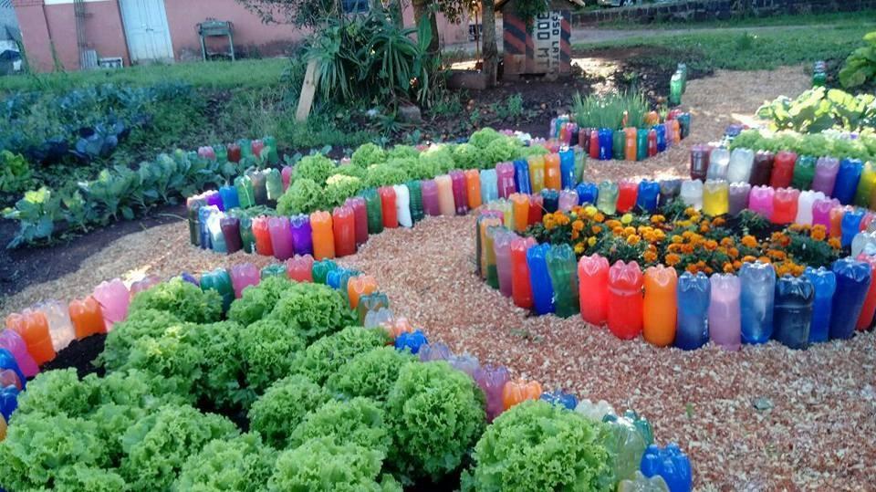 Projeto inédito no Brasil ensina alunos, pais e professores a cultivar alimentos orgânicos