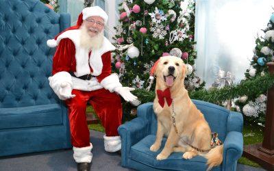 Tronos Pet ficam até a véspera de Natal em shoppings de Curitiba