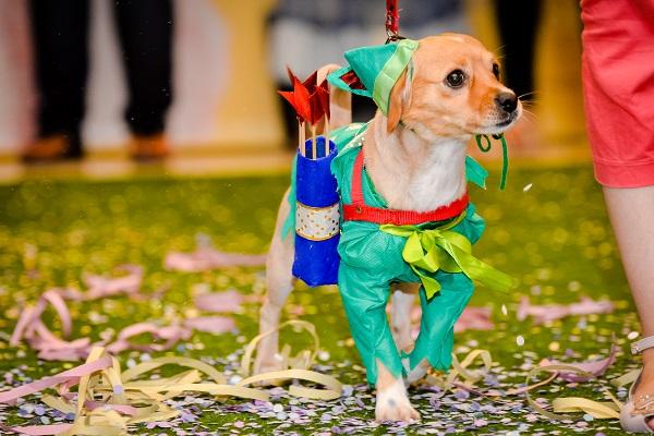 Pets ganham folia especial de carnaval em Curitiba