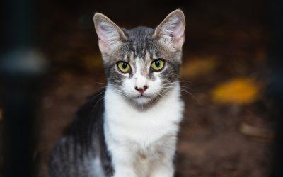 Pet center inicia temporada de encontros de adoção