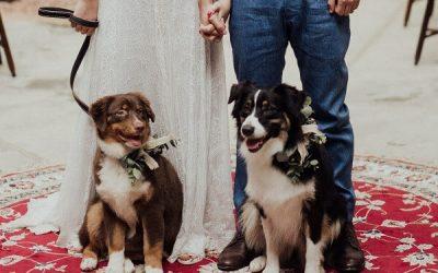 Vai casar e pretende colocar seu pet como 'noivinho'? Confira dicas