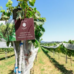vinicola legado