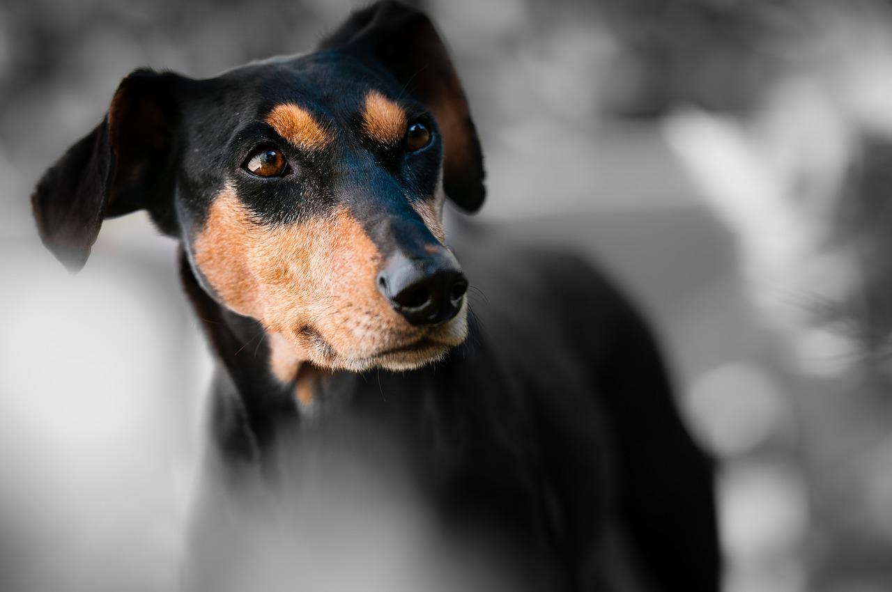 Jardim Animal - imagem pixabay