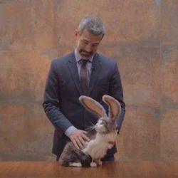 Gatinho protagoniza comercial e provoca campanha de ajuda aos animais