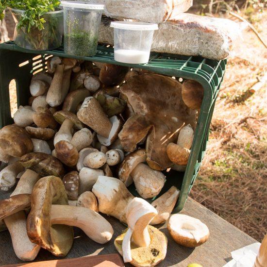 Caçada aos Cogumelos Selvagens